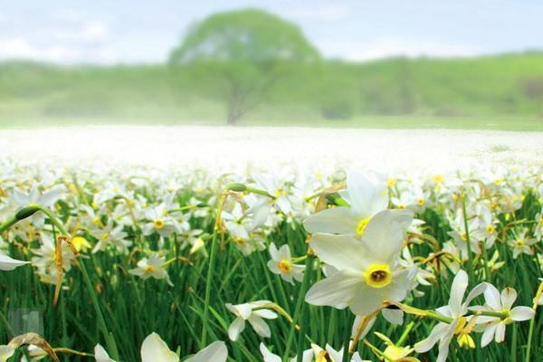 Как просвести майские праздники