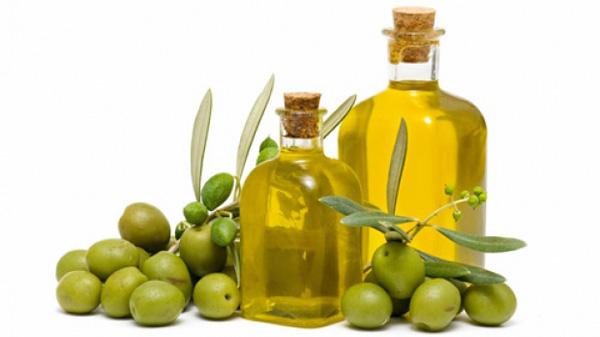 Олива – дерево с древней историей
